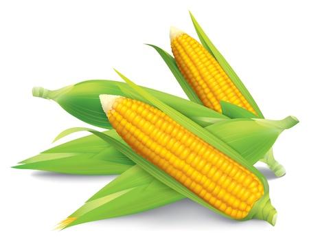 espiga de trigo: Ilustración maíz aisladas sobre fondo blanco