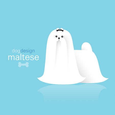 pet store advertising: Maltese terrier dog design on color background. Illustration