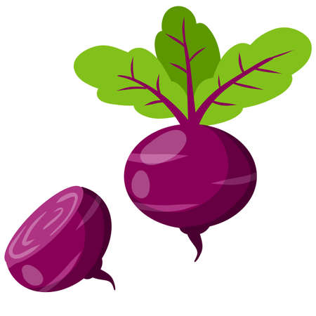 Beet. Red root vegetable. Set of Natural product. Harvest. Rural Plant and food. Healthy diet. Cartoon flat illustration
