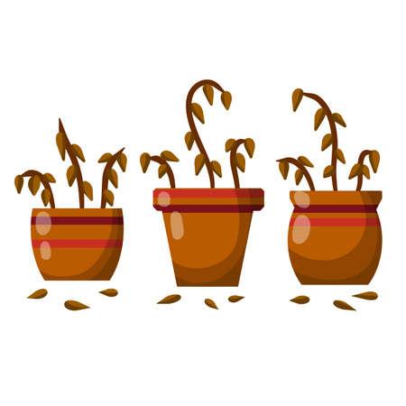 Dead houseplant. Dry leaves. Set of plants in pot. Forgotten bush. Element of room. Brown trunk. Cartoon flat illustration Illusztráció