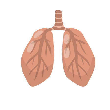 Lung x-ray. Problem with breathing. Medical care. Internal human organs. Cartoon flat illustration. Health and treatment