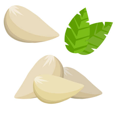 Garlic cloves. Spicy vegetable.  Cartoon illustration. Element of harvest. Natural product. Healthy diet. Seasoning and herb