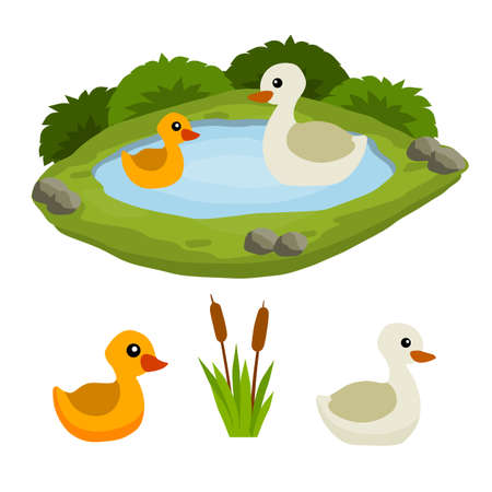 Ducks in the pond. Chicken swims in lake. Animal in wild and forest. Child of a bird in water. Flat cartoon.