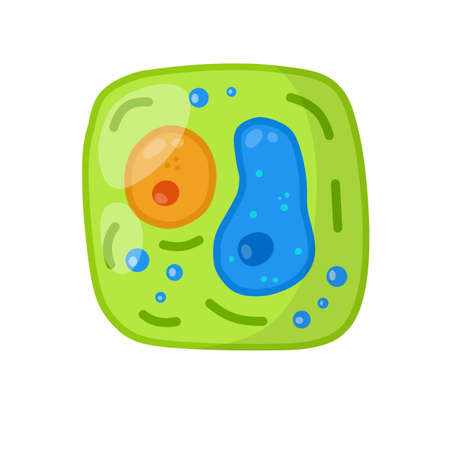 Green cell of the plant. Element of science and biology. Cartoon flat illustration. Microorganism by microscope. With core, details and membrane