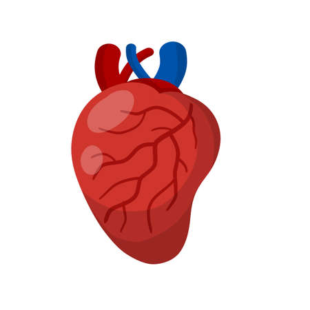 Heart. Human internal organ. Medicine and cardiology. Pumping blood through body. Element for textbook and medical education. Arteries and red veins. Cartoon flat illustration