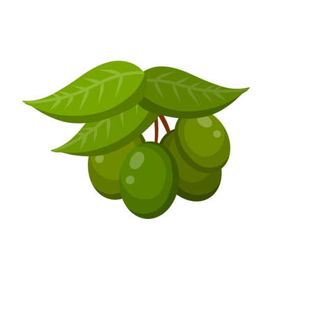 Olive. Green vegetable on branch with leaves. Element of oil and a healthy diet. Cartoon flat illustration isolated on white Ilustração