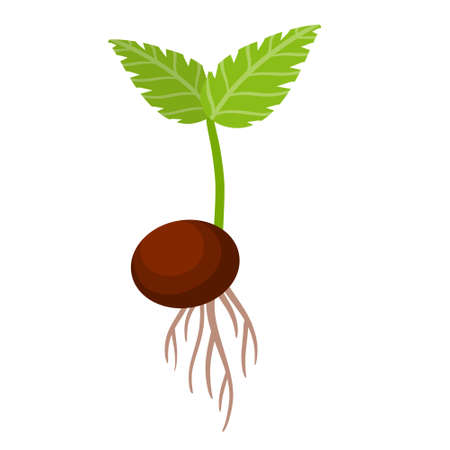 Sprout of plant. Small green leaves. Sprouted seed. Farm and gardening. Planting of crop. Element of nature and flora. Start of tree growth. Flat cartoon illustration
