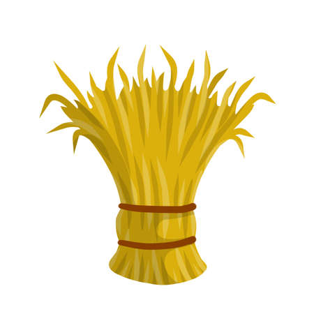 Sheaf of hay. Countryside is a Stack of wheat ears. Village harvest. Yellow dried plants. Production of natural food on the farm.