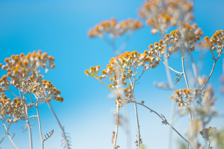 Dry plants with yellow flowers