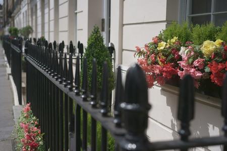 Flowers in pot on windowsill