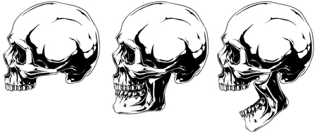 corpse: White human skull in profile projection set