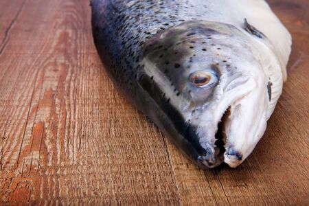 animal scale: salmon