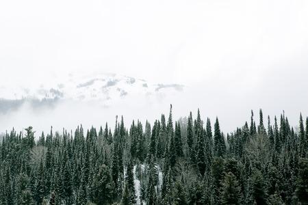 mt baker: winter mountain forest