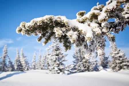 hill range: winter forest