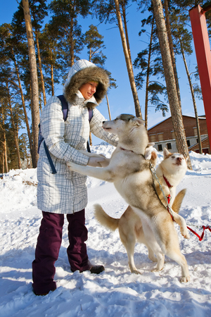 sled dogs: young woman with sled dogs