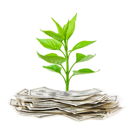 green fuel: money growth Stock Photo