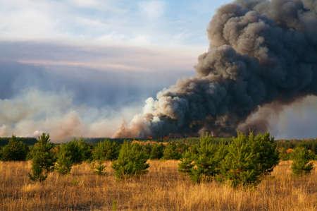 convulsión: incendio forestal