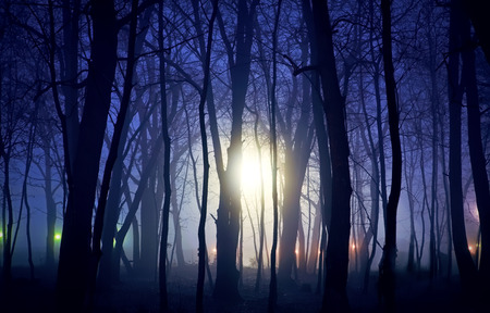 unknown lights and night in the forest