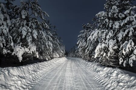 night road through winter forest Stock Photo