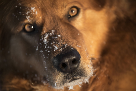 nose: dog nose with snowflakes