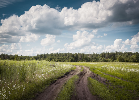 Dirt road over the green meadow. Russian landscape.