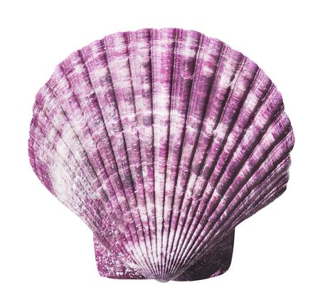 Sea shell isolated Archivio Fotografico