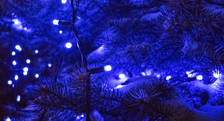 outdoor lighting: snow-covered fir branches, lit by blue light Christmas lights