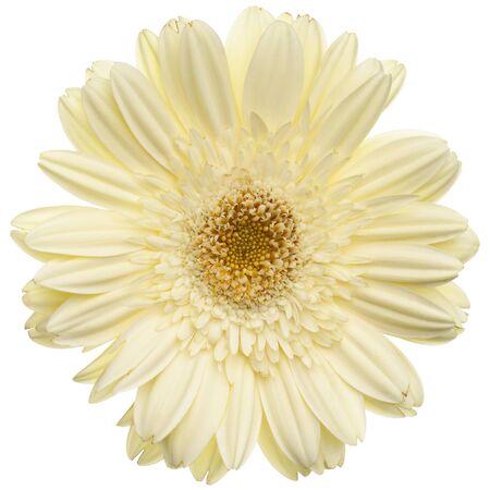on white: White daisy flower isolated on white background Stock Photo