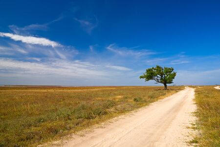 Farm road leading to an old tree - Arabat Spit, Crimea, Ukraine. photo