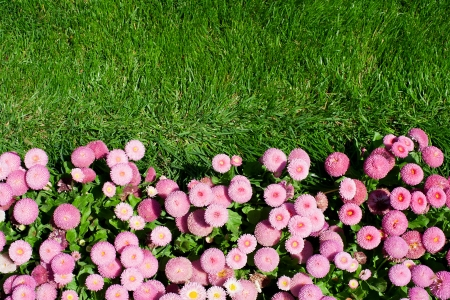Pink flowers and green lawn  photo