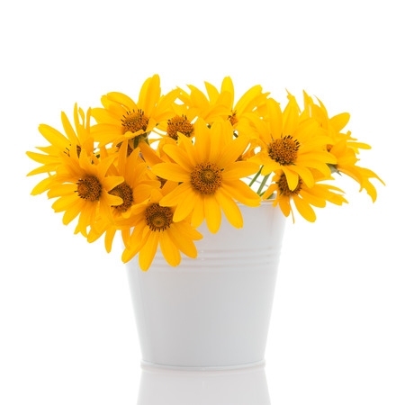 bright eyed: White little bucket with Rudbeckia flowers isolated on white  Stock Photo