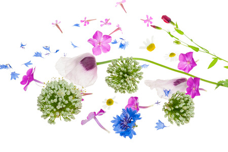 garden cornflowers: Abstract flower background with opium poppy and other wildflowers.