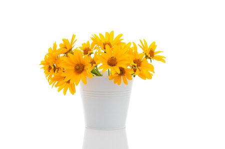coneflowers: White little bucket with Rudbeckia flowers isolated on white.