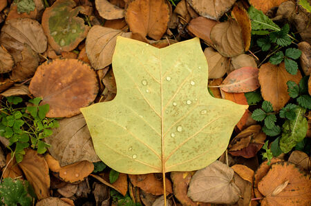 A closeup of a grungy autumn leaves with water drops on the ground. photo