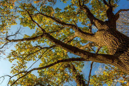 directly below: Tree in autumn colors with a below perspective