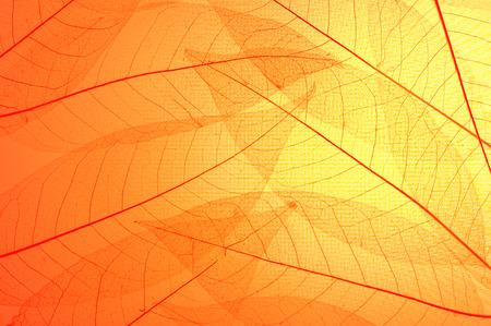 Esqueleto vermelho e amarelo deixa o fundo abstrato