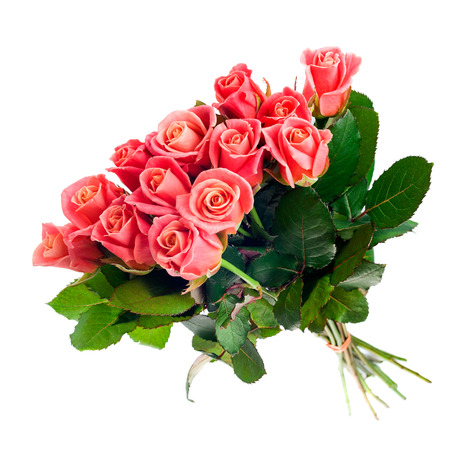 Pink roses bouquet isolated on white background, full length, with stem.