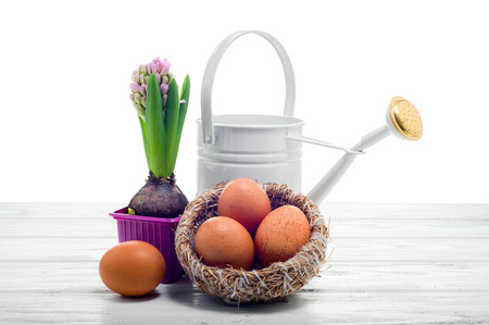 bailer: Easter still life with a hyacinth, watering can and yellow eggs in the nest, on white background.