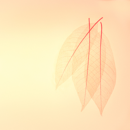 venation: Three skeleton leaves abstract background.