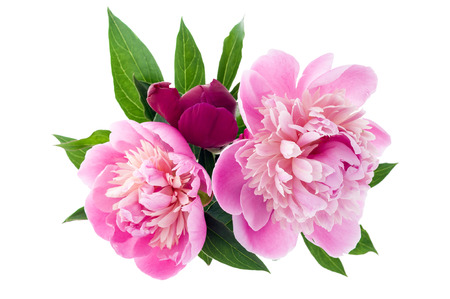 Studio shot of peony bouquet isolated on white background. Top view.