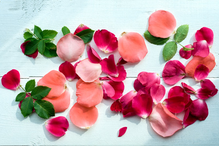 Rose petals leaves on white wooden background, top view. Natural flower background, Romantic floral background, Valentines day background. 写真素材