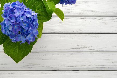 Blue hydrangea flower over white wooden background.
