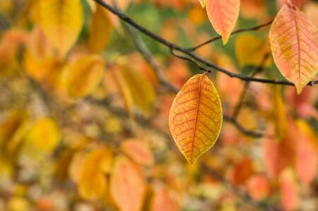 dof: Autumn leaves in a park with copy space, shallow DOF. Natural autumn background.