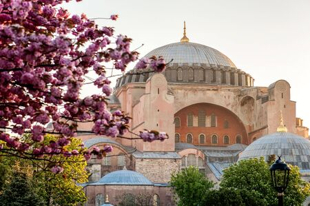 constantinople ancient: View of Hagia Sophia with pink tree blossom in spring time, Istanbul,  Turkey. Focus is on the Hagia Sophia, pink blossom branch is out of focus. Editorial