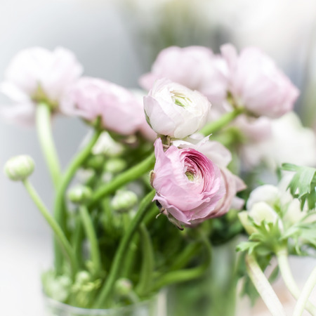 high key: Bunch of white and pink eustoma flowers in glass vase. High key natural backgrouns, shallof DOF, soft focus, square composition. Stock Photo