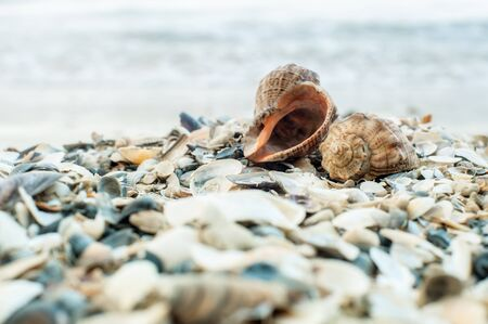 Close-up of two shells on the beach with sea on background, shallow DOF, soft focus.