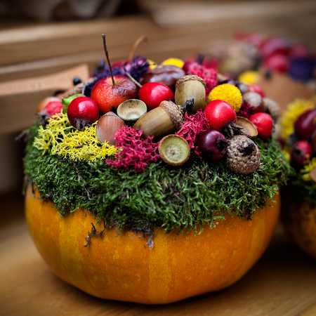 Halloween pumkin used as a vase for floristic composition. Fall natural decoration. Square composition. Stock Photo