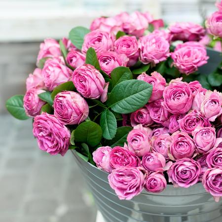 Beautiful pink roses in bucket on street flower market pink stock beautiful pink roses in bucket on street flower market pink roses flowers holiday background mightylinksfo