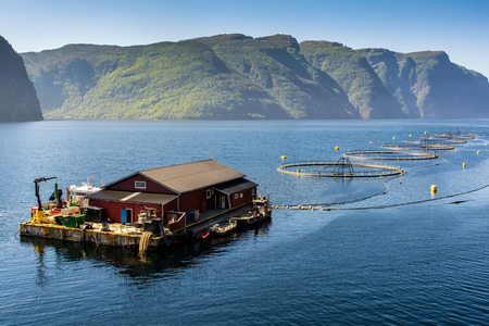 Norwegian fish farm for salmon growing in natural environment. Sea fjord in Western Norway.