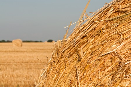 rolling haystack and wheat on farmer field photo